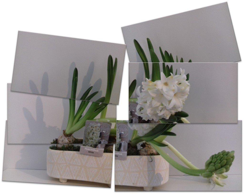 98 Drakkar blanc - photomontage perso - 2021